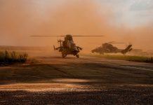 Tigre au Sahel.